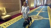 LABRADOR - Terapi Köpekleri Zihinsel Engelli Çocuklara 'Yoldaş' Olacak