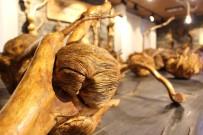 BOTANİK BAHÇESİ - Ağaçların 'Yeraltı Dünyası' Müze Oldu