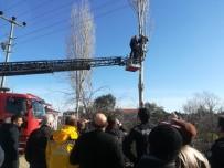 Ağaç Budarken Elektrik Akımına Kapıldı