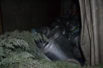 ALANYURT - Tüp Yüklü Kamyonet Devrildi