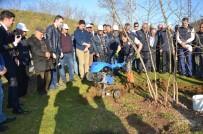 Fındık Bahçelerinde Doğru Uygulamalar Verimi Arttırıyor