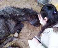 YOGA - Garip İsimli At, Dana Ferdinand'a Arkadaş Olacak
