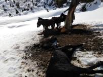 Isparta'da Karda Yiyecek Bulamayan Yılkı Atları Açlıktan Öldü
