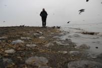 DEĞIRMENDERE - İzmit Körfezinde Sahili Kaplayan Yüzlerce Denizanası Görenleri Şaşırttı