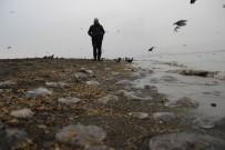 İSTANBUL BOĞAZI - Kocaeli Büyüşehir Belediysi Açıklaması 'Denizanalarının Çoğalma Nedeni Kirlilik Değil, Doğa Olayı'