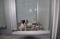 SAĞLIK KARNESİ - Petshop Sahipleri Açıklaması 'İnternetten Yapılan Hayvan Satışları, Kontrolsüz Satışları Arttırır'