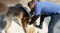 Hakkari'deki Sokak Hayvanları Sağlık Taramasından Geçirildi