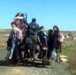 KARAKÖPRÜ - 9 Öğrenciyi Traktörde Taşıyan Sürücüye Şok Ceza