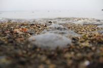 MEHMET CENGİZ - Denizanası İle Temastan Kaçınılmalı