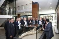 SERGİ AÇILIŞI - Dünyada Tek Örneği Bulunan 7,4 Milyon Yıllık Fosiller Sergide Ziyarete Açıldı