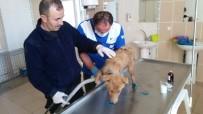Su Kanalına Düşen Yavru Köpek Kurtarıldı