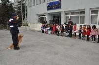 Jandarma Köpeklerinin Gösterisini Minikler Şaşırarak İzledi