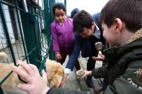 Harçlıklarından Arttırdıkları Paralarla Sokak Hayvanlarına Mama Aldılar