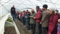 KAYALı - Türkiye Tıbbı Ve Aromatik Bitkilerde Dışa Bağımlılıktan Kurtulacak