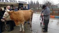 AHMET SALIH DAL - Üreticilere Süt Sağım Makinesi Dağıtıldı
