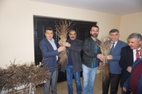 Çiftçilere Mazrone Fidanı Dağıtıldı