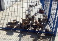 Ortaca'da Sokak Hayvanlarını Doyurmak İçin İhale