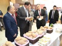 KARBONHİDRAT - Sivas'ta Patatesin Üretimi Ve Sorunları Anlatıldı