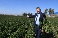 KÜRKÇÜLER - Patates Üreticilerini Don Vurdu