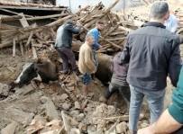 Depremde Ahır Çöktü, İnekler Enkaz Altında Kaldı