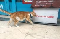 FENOMEN - Fenomen Kedi Market Çalışanları Tarafından Sahiplenildi