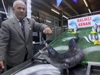 HATIRA FOTOĞRAFI - 3  Metre Boyundaki Dev Yılan Balığı Görenleri Hayrete Düşürdü
