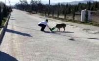 Başına Karton Kutu Sıkışan Köpeği, Duyarlı Vatandaş Kurtardı