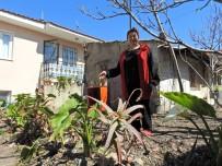 Kanser Tedavisi Gören Kadın, Çöp Yuvasını Bahçeye Çevirdi