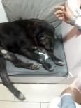 ŞEYH ŞAMIL - Kartal'da Sokak Köpeklerini Zehirlediler