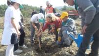 Marmaris'te Dünya Ormancılık Günü Ve Orman Haftası Etkinlikleri