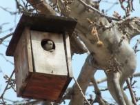Ağaçlara Kuş Evler Monte Edildi