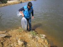 Göletlere 7 Bin Adet Pullu Sazan Balığı Yavrusu Bırakıldı