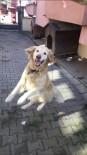 Kaybolan Köpeğini Bulana Yemek Ismarlayacak