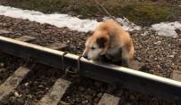 PETERSBURG - Rusya'da Köpeği Raylara Bağladılar