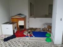 HAYVAN SEVGİSİ - Saldırgan Sokak Köpekleri İçin Kaymakamdan Yardım Talebi