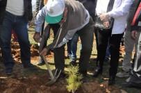 OKSİJEN KAYNAĞI - Sandıklı'da Fidanlar Toprakla Buluştu