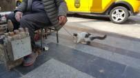 SOKAK KEDİSİ - Boyacıyla Sokak Kedisinin Dostluğu Görenleri İmrendiriyor