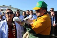 Bakan Pakdemirli Altız Kuzuları Biberonla Besledi