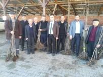 Daday'da Meyve Fidanı Dağıtıldı
