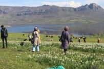 Gerger'deki Yaban Nergisler Yerli Turistlerin Akınına Uğruyor