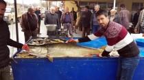 KARASU NEHRİ - Karasu Nehri'nde 82 Kiloluk Turna Balığı Yakalandı