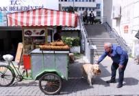 GEVREK - (Özel) İzmir Gevreği Sevdalısı Köpek Daisy