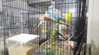 Bu Kuşlar 'Türkü' Dinleyerek Büyüyor