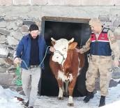 Kardaki Toynak İzleri Hırsızlık Zanlısını Yakalattı