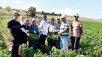 SEMERKANT - Sanayi Bölgesinin Ham Madde İhtiyacı Yerel Tohumlar İle Karşılanacak