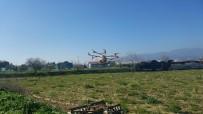 MEHMET ESEN - Aydın'da Drone İle İlaçlama Yapıldı