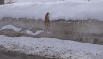 Kedinin Karla İmtihanı