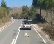EĞİTİM DERNEĞİ - İzmir'de Yürek Sızlatan Olay Açıklaması Köpeği Otomobile Bağlayıp Sürükledi