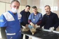 POLİS İMDAT - Köpeklerin Kovaladığı Yavru Tilki Kurtarıldı