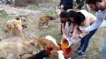 Atık Yemekleri Toplayıp Sahipsiz Hayvanları Besliyorlar